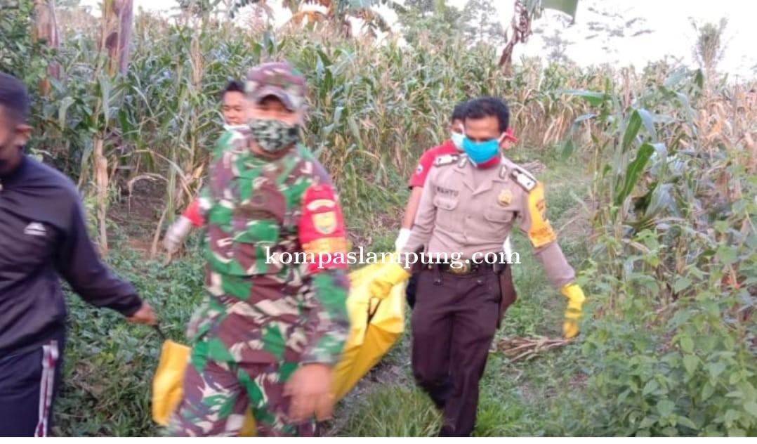 Mayat Anonim Ditemukan Di Ladang Jagung Desa Bandar Dalam Kecamatan Sidomulyo