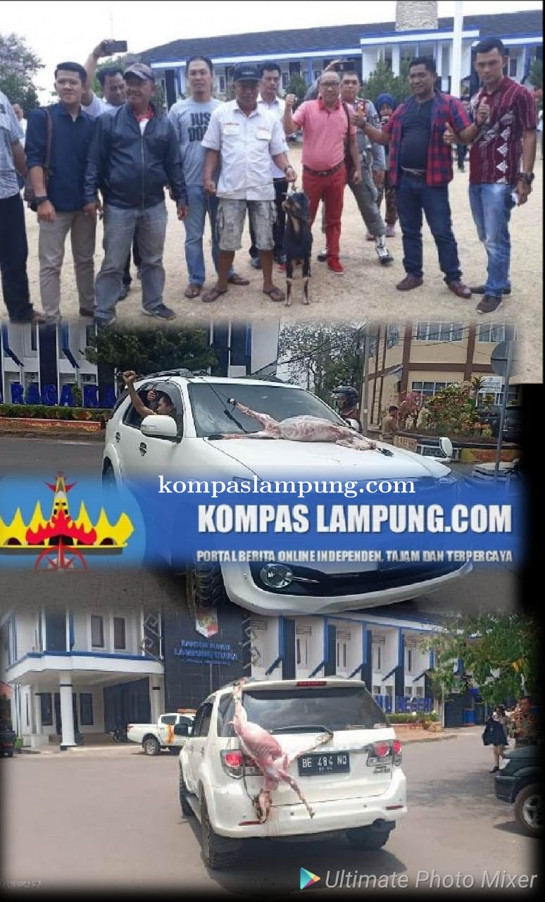 Bupati Di OTT KPK, Masyarakat Lampura Potong Kambing Serta Arak-Arakan Mobil Di Halaman Pemkab