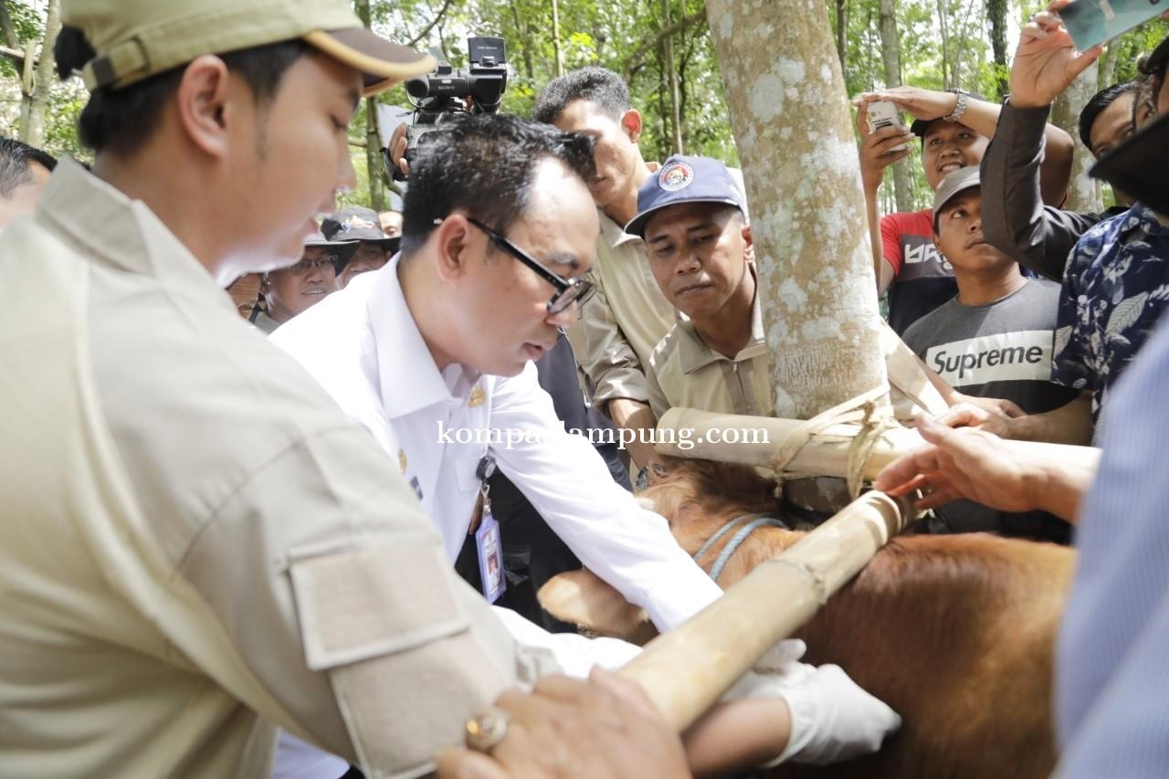 Bupati H. Raden Adipati Surya, S.H.,M.M menghadiri Acara Pelayanan Terpadu Peternakan dan Kesehatan