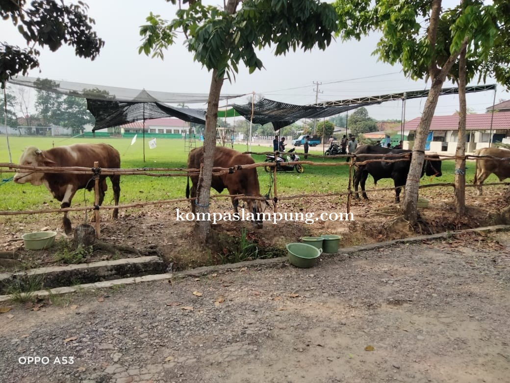 Masyarakat Desa Banjar Rejo Qurbankan 80 Ekor Sapi Dan 34 Ekor Kambing  Di Hari Idul Adha 1442 H